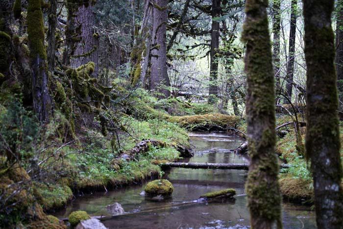 rivier, bos, mossen, Jiuzhaigou Nationaal Park, China