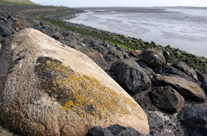 dijksteen Texel korstmossen Verrucaria fusconigrescens