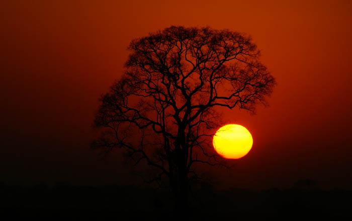 zon, zonsopkomst, Pantanal, Transpantaneira, Brazilië