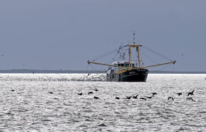 visserij, vissersschip, Waddenzee, Eidereend, Somateria mollissima