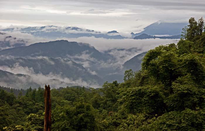 bergen, bergbos, wolken, Wawu Shan, China