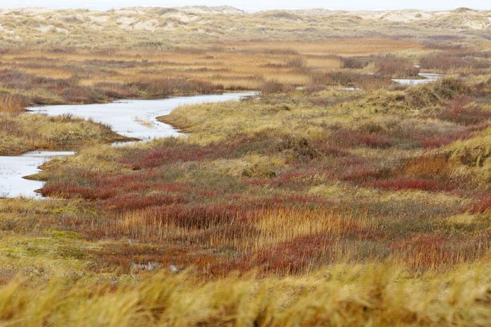 primaire duinvallei, winterkleuren, de Hors, Texel, waddengebied