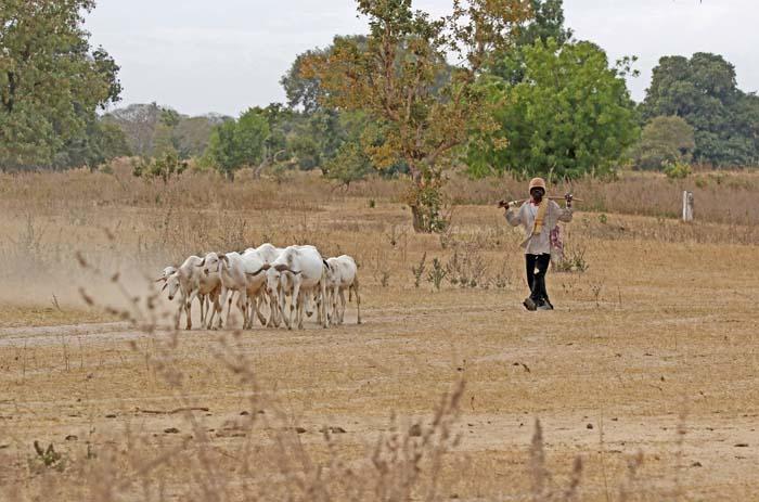 Herder, Wassu, Gambia
