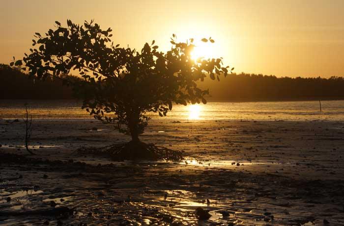 Gambia zonsondergang Tendaba rivier mangrove