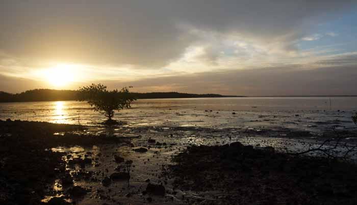 Gambia Tendaba zonsondergang mangrove