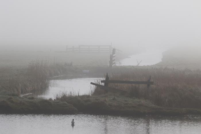 natuurgebied, waddengebied, Texel, mist, de Petten