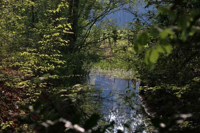 Leyensebos voorjaar Bilthoven